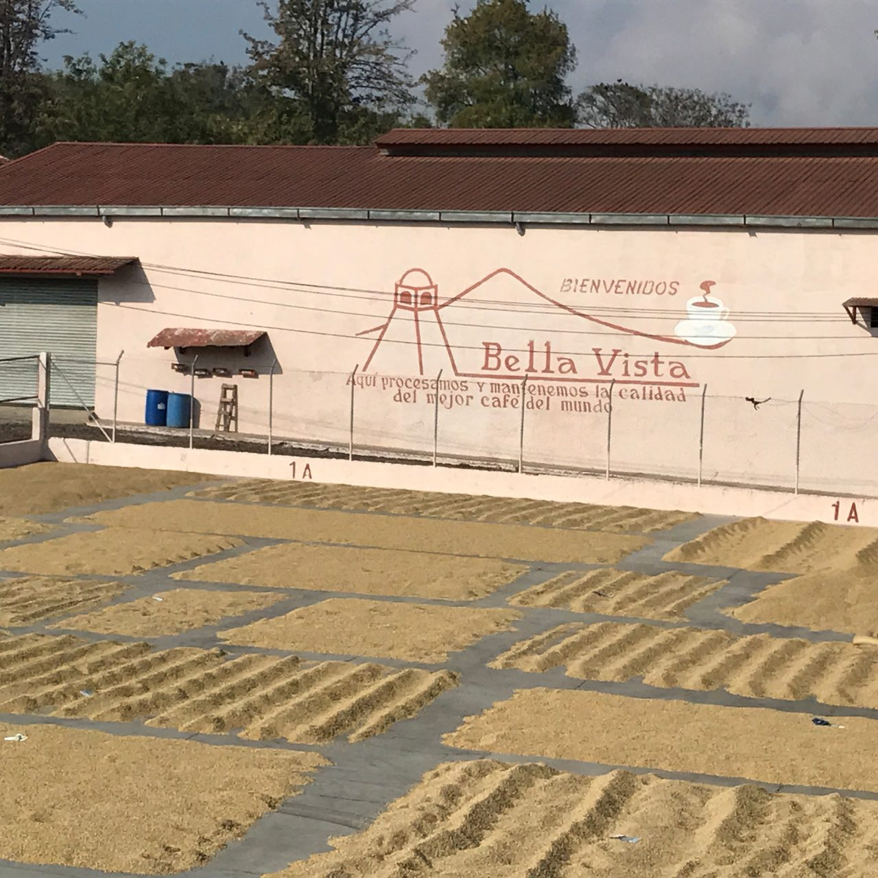 Guatemala Bella Vista Drying Beds