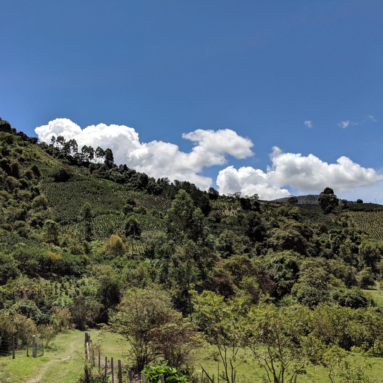 Guarnizo Family land
