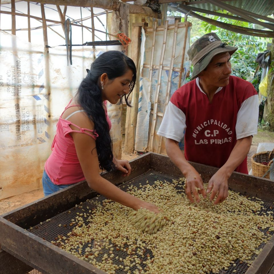 Workers sorting coffee in Peru