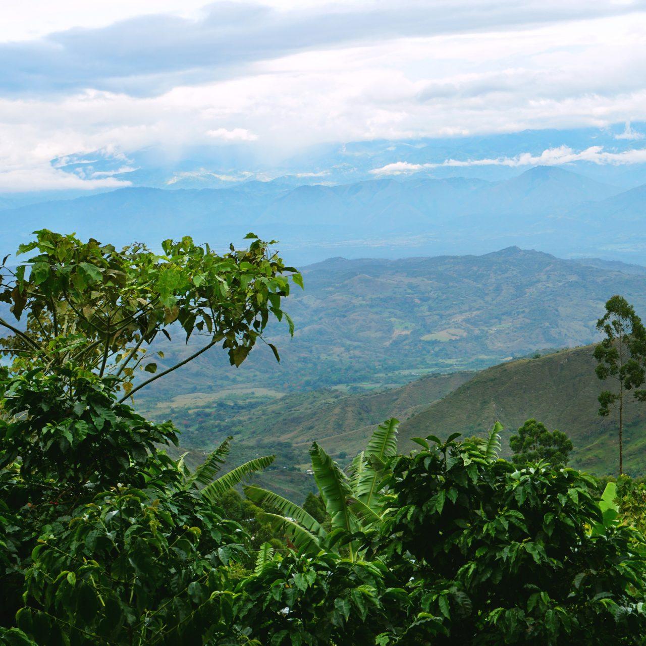 View of the Central Cordillera mountains from the Guarnizo farm