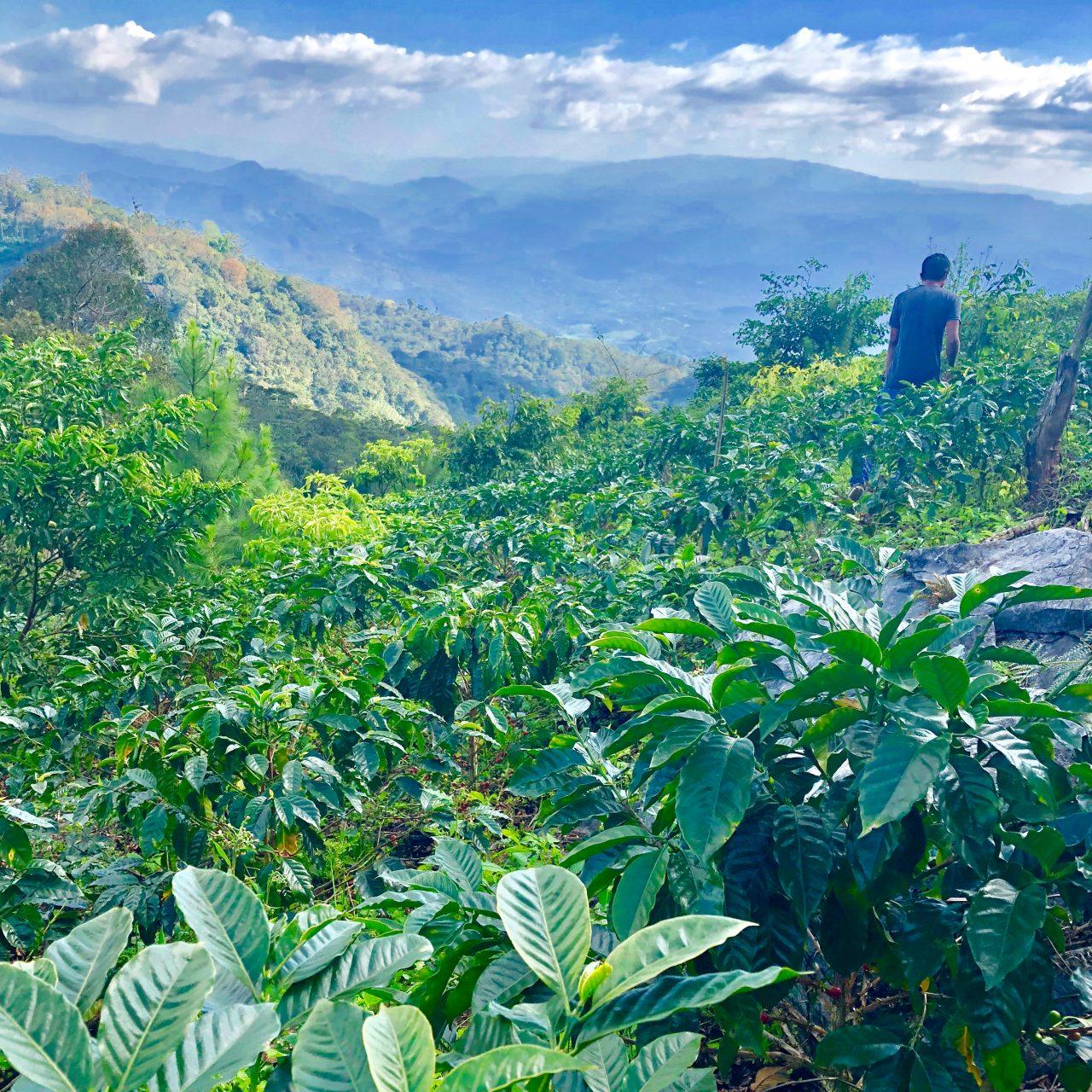 Honduras Cuatro Joyas