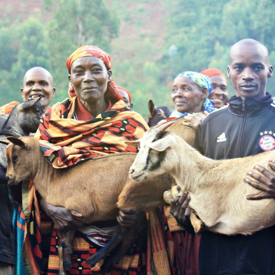 Goats distributed to farmers by Sucafina