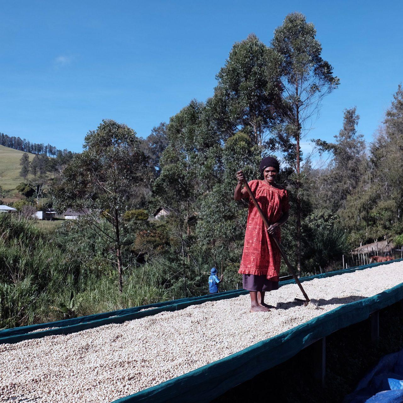 Woman raking coffee at the Baroida Estate