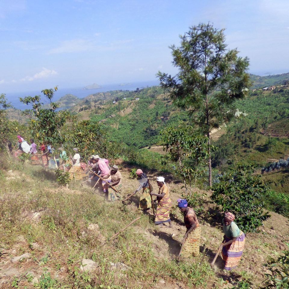 Women of Ejo Heza clear brush on a hillside