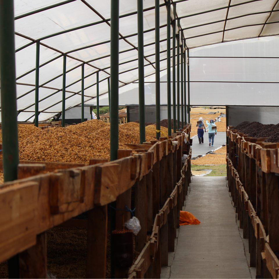 Drying beds at Beneficio don Esteban