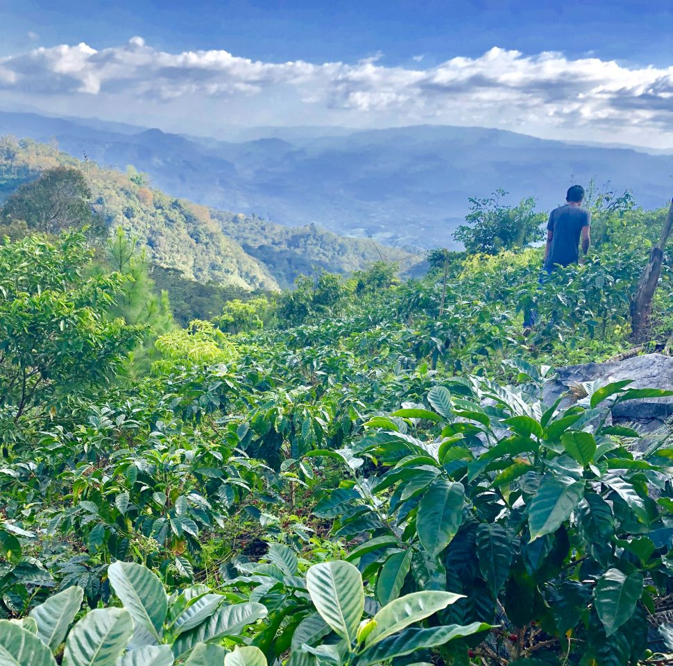 View from the slopes of Finca Ruland