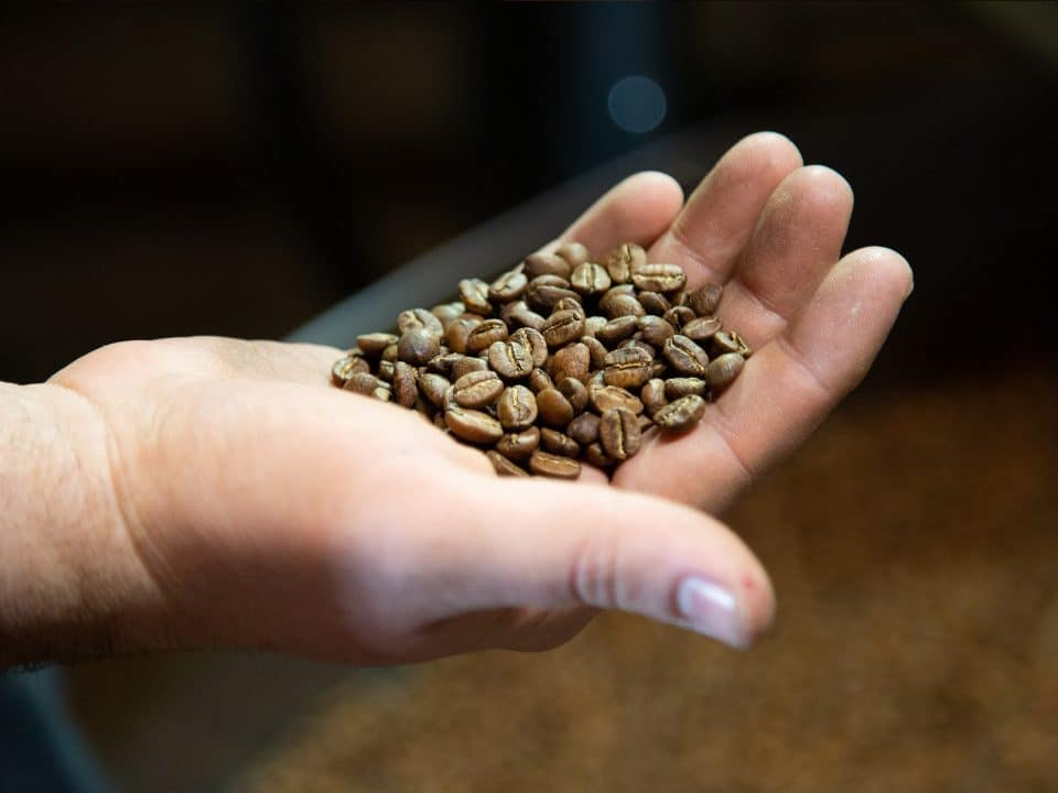 Hand holding freshly roasted beans