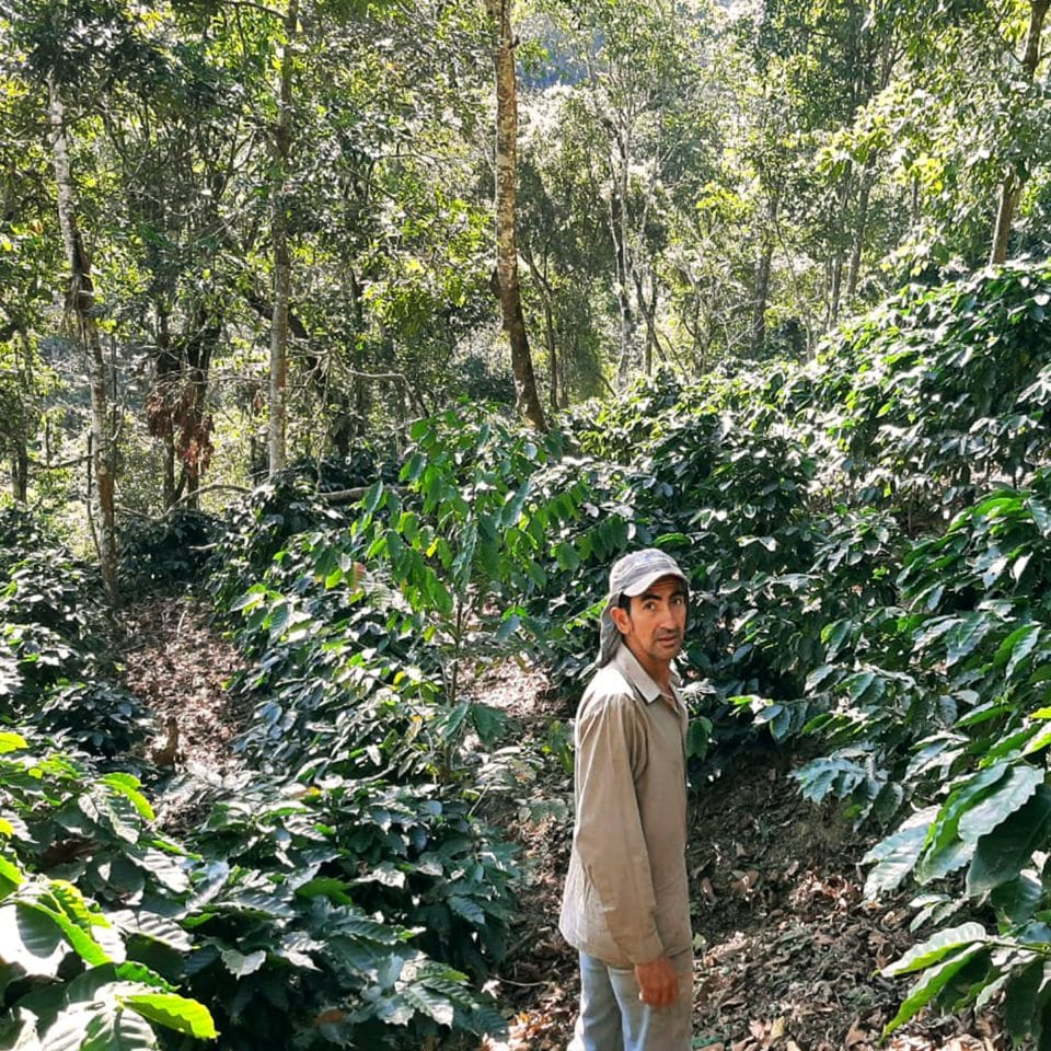 Wilber Sanchez stands among his coffee trees