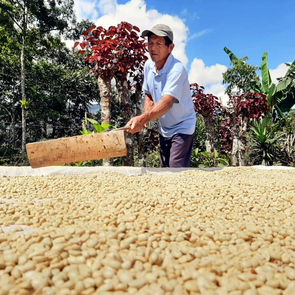 Ulbio Rogel rakes drying coffee on patio