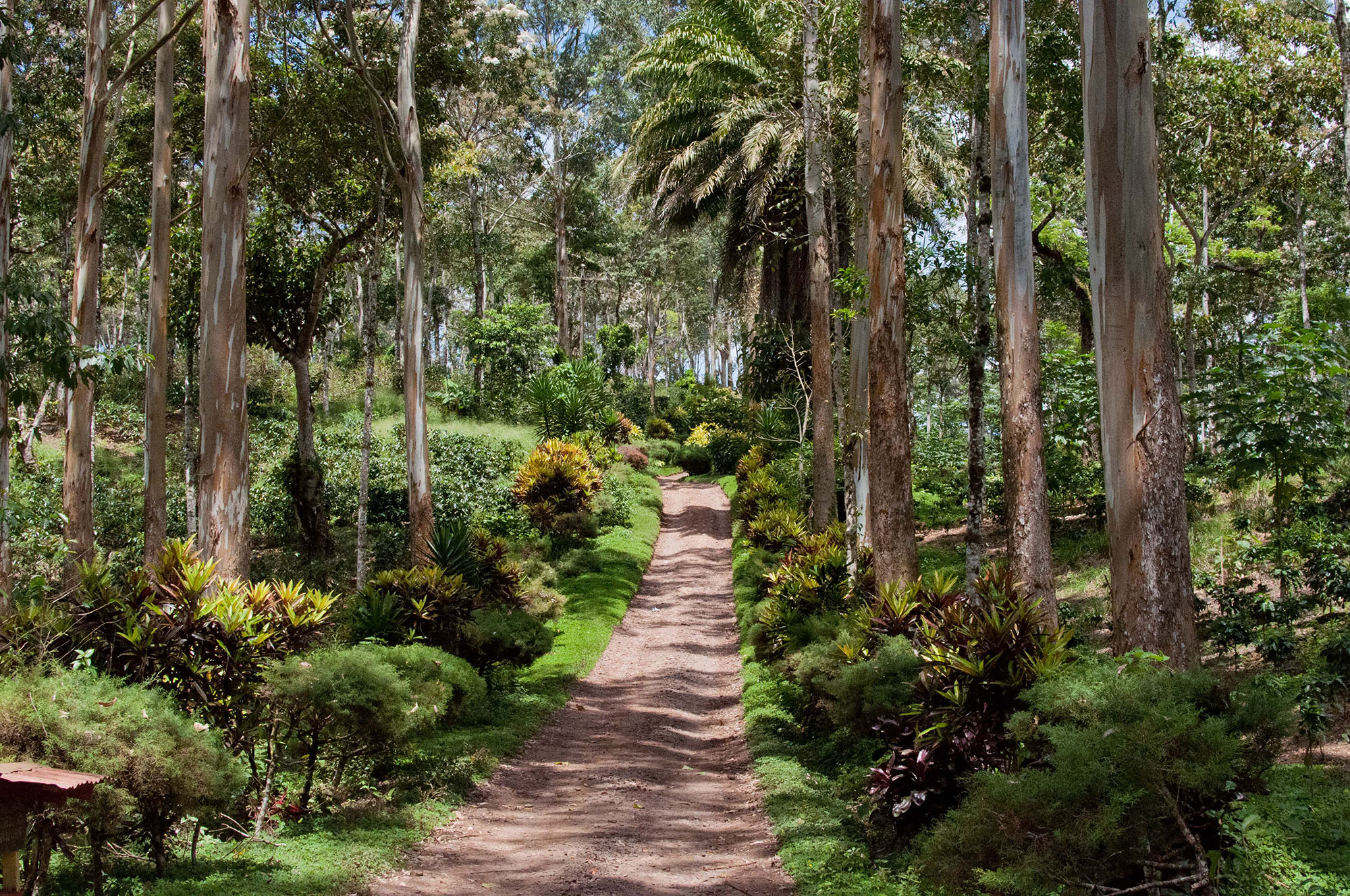 A lane surrounded by palm trees at Fincas Mierisch